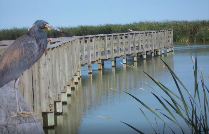 New Boardwalk Underway at Port Aransas Birding Center