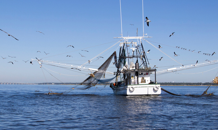 Texas Shrimp fishery to close from May 15 to around July 15