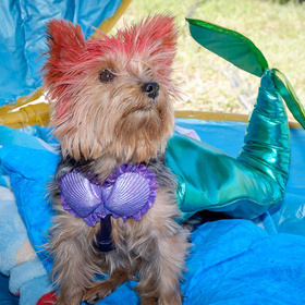 Dogs dolled up for Bark in the Park in Corpus Christi