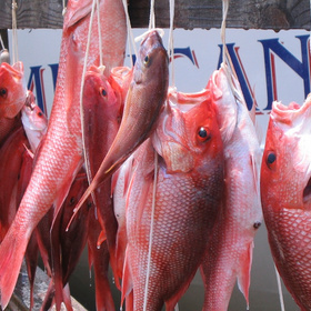 Gulf States Now Rule Red Snapper Seas