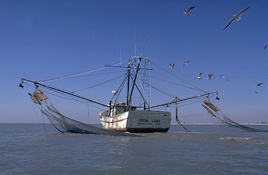 Gulf Shrimping Season Closes May 15