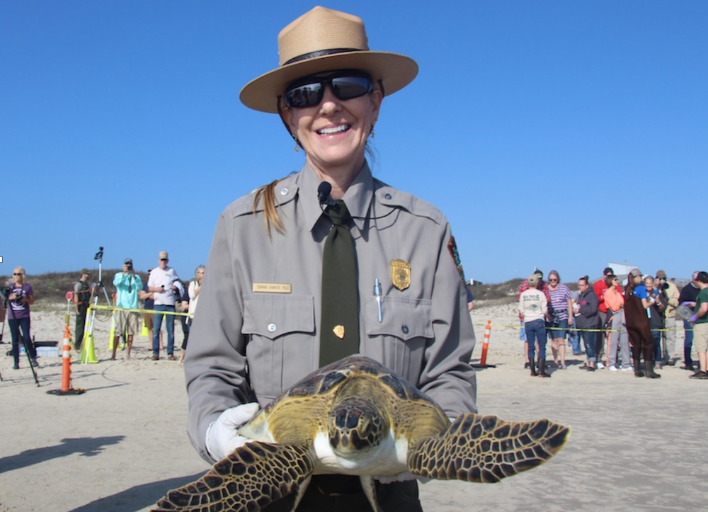 Turtle Troubles at Padre Island National Seashore